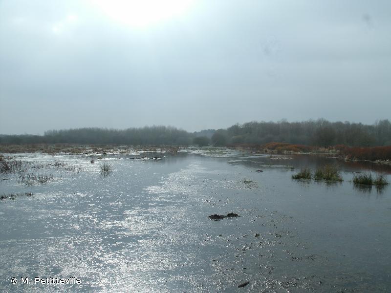Marais de Grande Brière et du Brivet