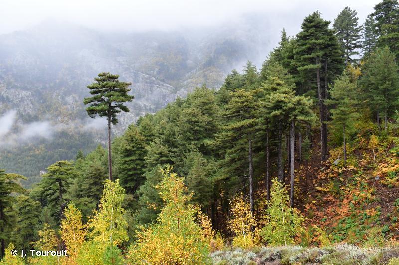 Forêts de Tartaghjine et de Milaghja
