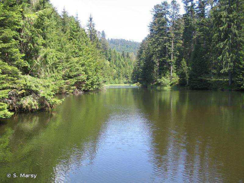 Ruisseau et tourbière de Belbriette