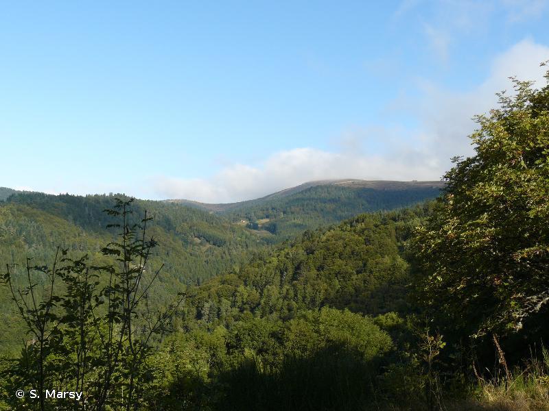 Monts du Forez