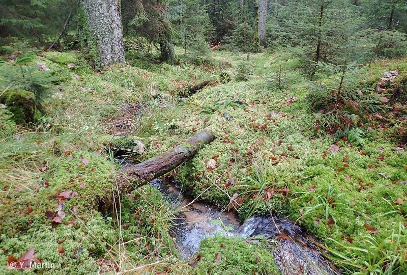 Milieux tourbeux des Blanches Roches, du Rond Perthuis, de la Maxe, du Ruisseau de la Truite et de la Vallée des Framboises