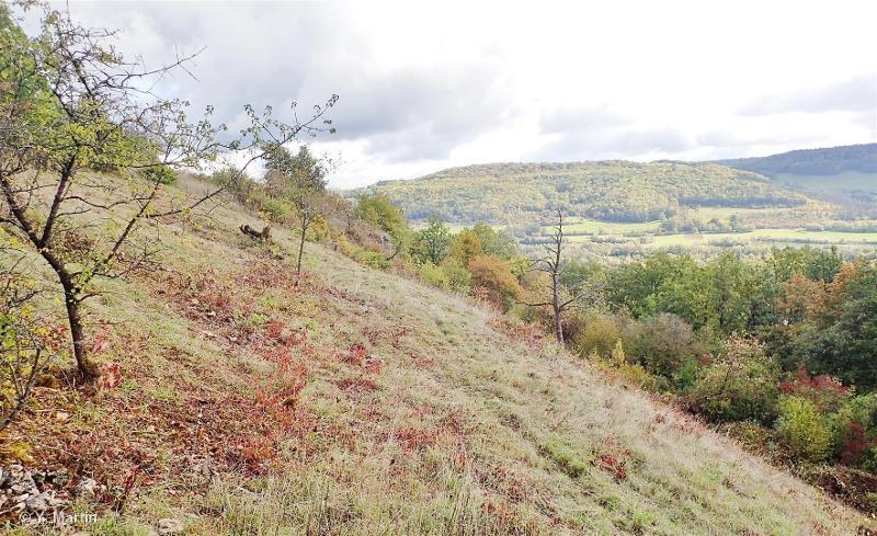 Pelouses et vallons forestiers du Rupt de Mad