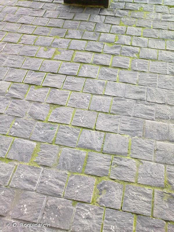 J4.6 - Surfaces pavées et espaces récréatifs - EUNIS