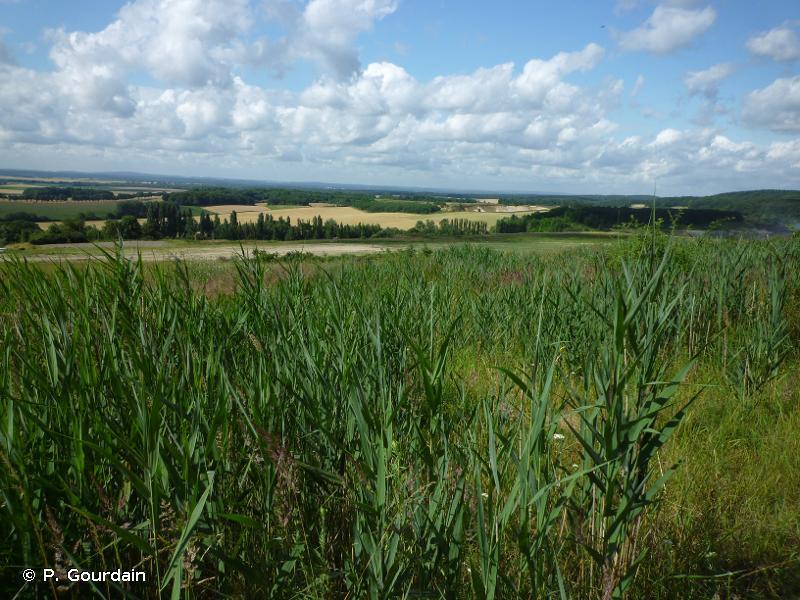 53 - Végétation de ceinture des bords des eaux - CORINE biotopes