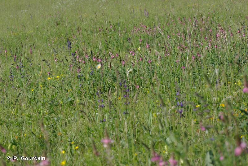 E2.3 - Prairies de fauche montagnardes - EUNIS