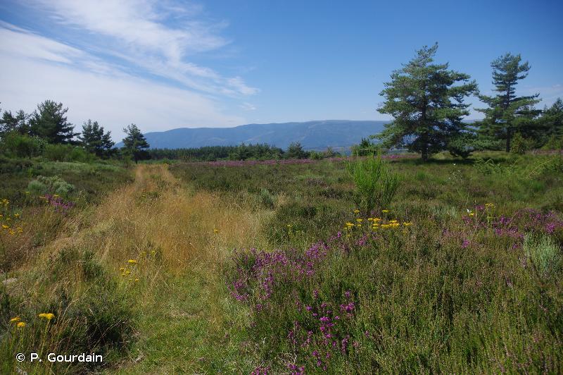 Plateau de Montselgues