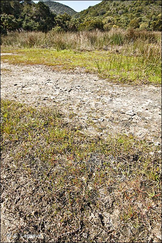 15 - Marais salés, prés salés (schorres), steppes salées et fourrés sur gypse - CORINE biotopes
