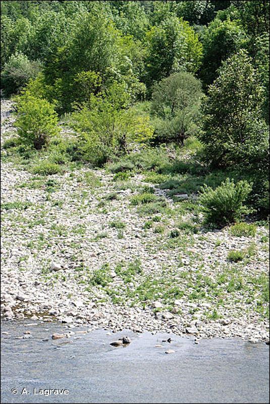 F9.14 - Fourrés et boisements des graviers des berges - EUNIS