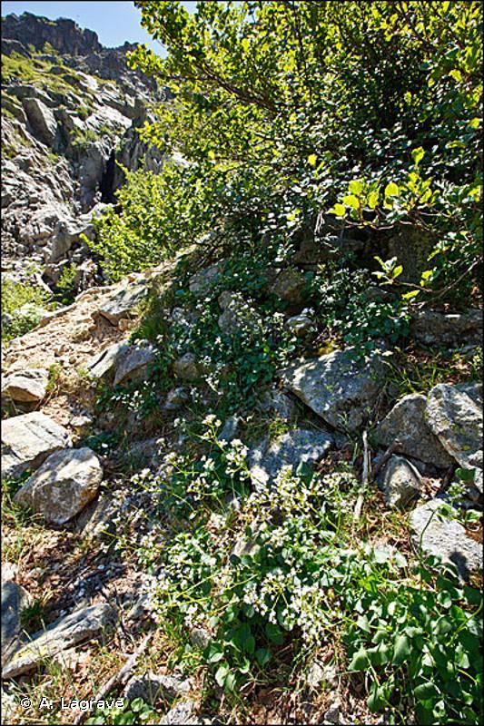 E5.4 - Lisières et prairies humides ou mouilleuses à grandes herbacées et à fougères - EUNIS