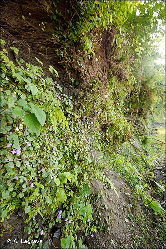 6430 - Mégaphorbiaies hygrophiles d'ourlets planitiaires et des étages montagnard à alpin - Habitats d'intérêt communautaire
