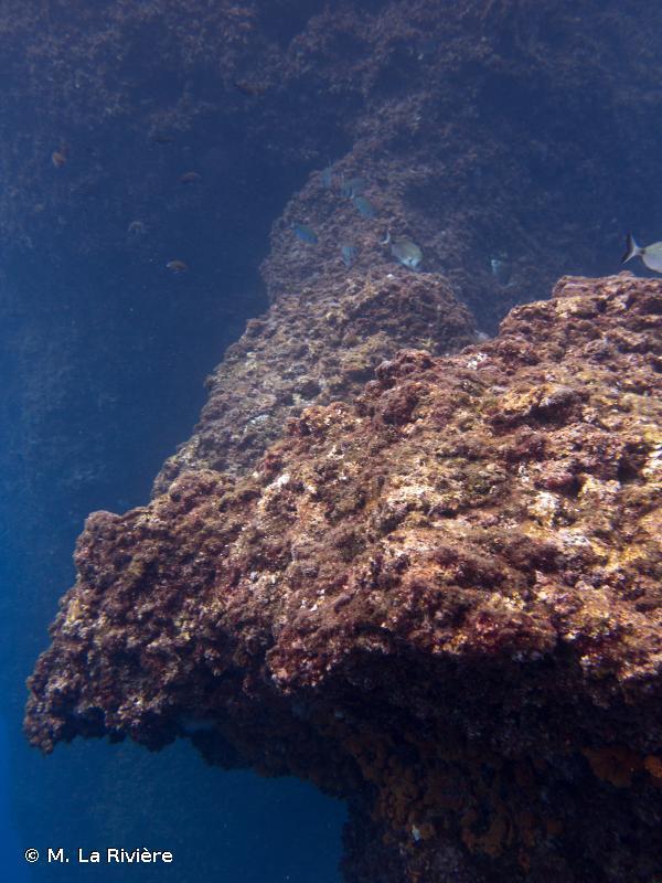 1170-13 - La roche infralittorale à algues photophiles (Méditerranée) - Cahiers d'habitats