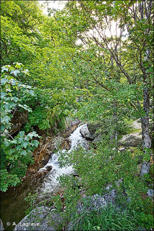 G1.212 - Bois des rivières à débit rapide à <em>Fraxinus</em> et <em>Alnus</em> - EUNIS