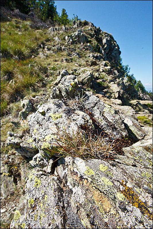 62.4 - Falaises continentales dénudées - CORINE biotopes