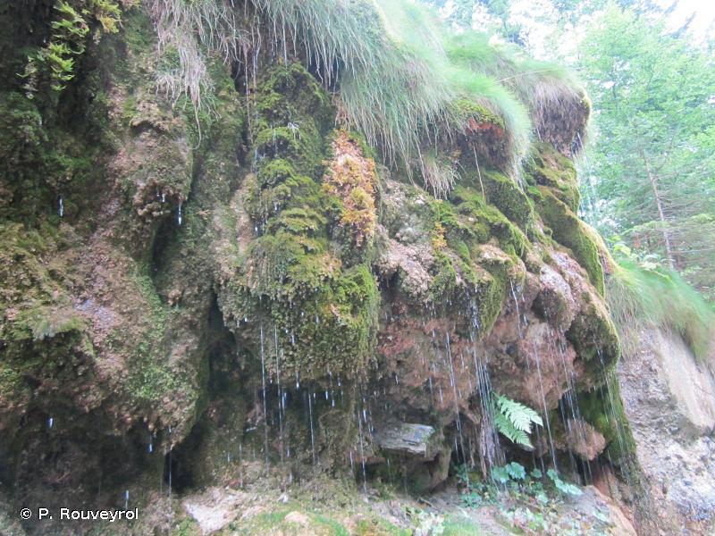 7220-1 - Communautés des sources et suintements carbonatés - Cahiers d'habitats