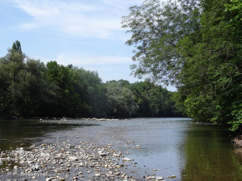 Le Gave d'Oloron (cours d'eau) et marais de Labastide-Villefranche