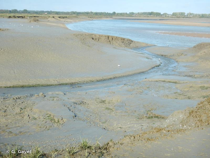Estuaire de l'Orne