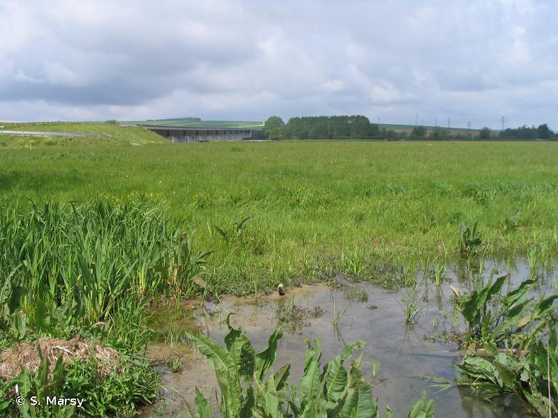 La Meuse et ses annexes hydrauliques