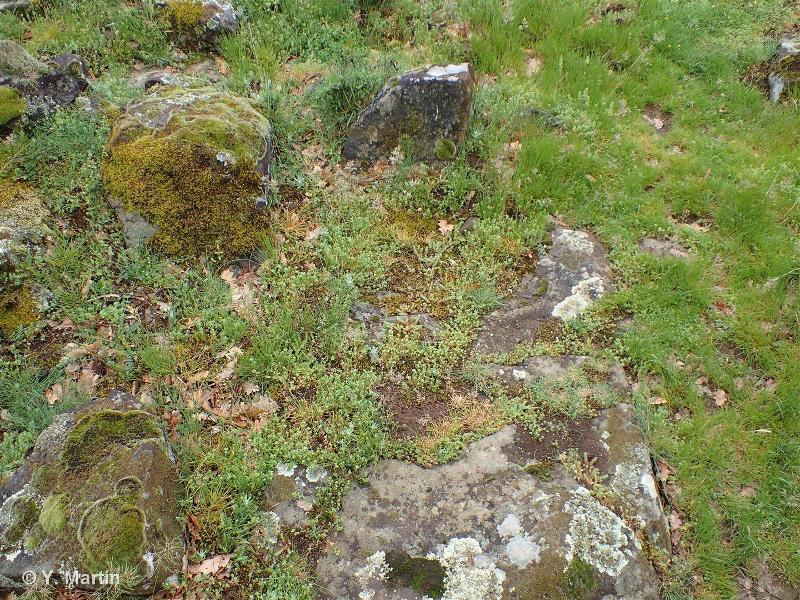 E1.114 - Communautés médio-européennes des débris rocheux à petites herbacées non-graminoïdes - EUNIS
