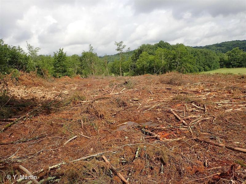 G5.8 - Coupes forestières récentes - EUNIS