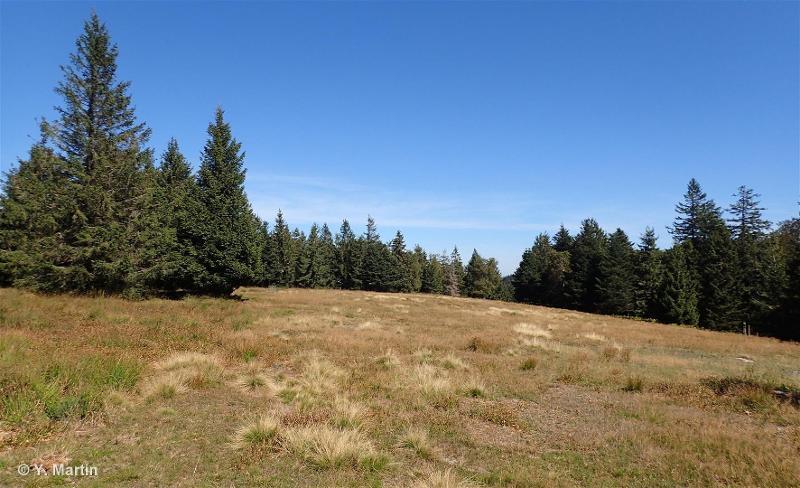 Crête du Noll, du Schneeberg et du Rocher de Mutzig