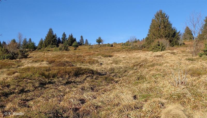 Prairies humides des Hautes Huttes d'Orbey