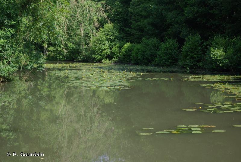 C1.3 - Lacs, étangs et mares eutrophes permanents - EUNIS