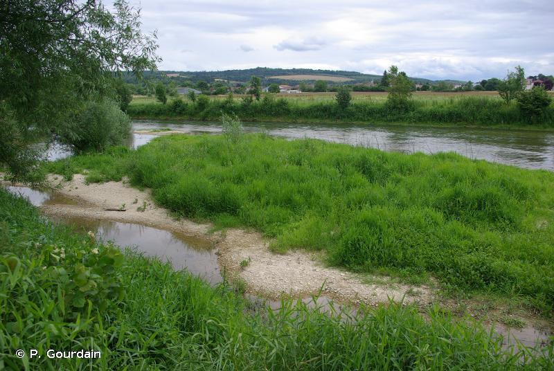 C3.5 - Berges périodiquement inondées à végétation pionnière et éphémère - EUNIS