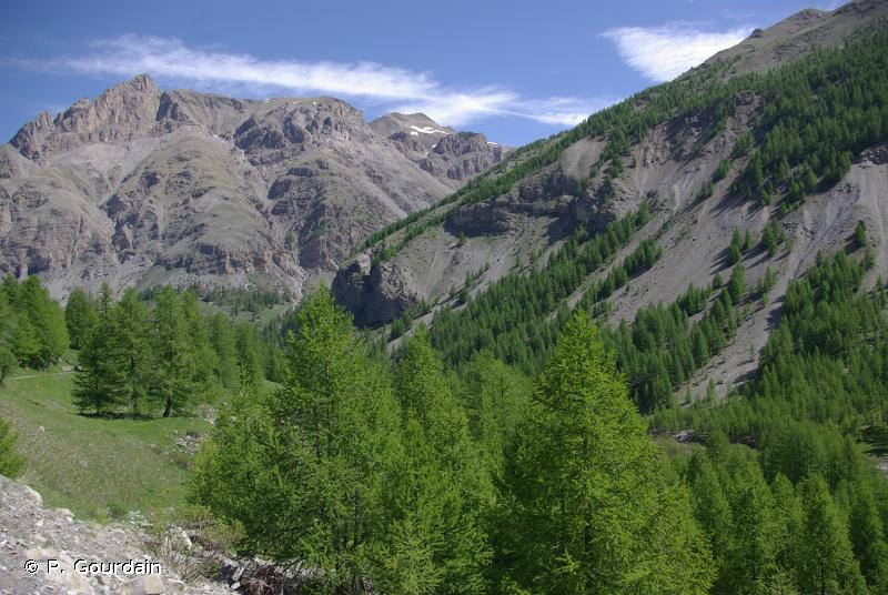 G3.2 - Boisements alpins à <em>Larix</em> et <em>Pinus cembra</em> - EUNIS