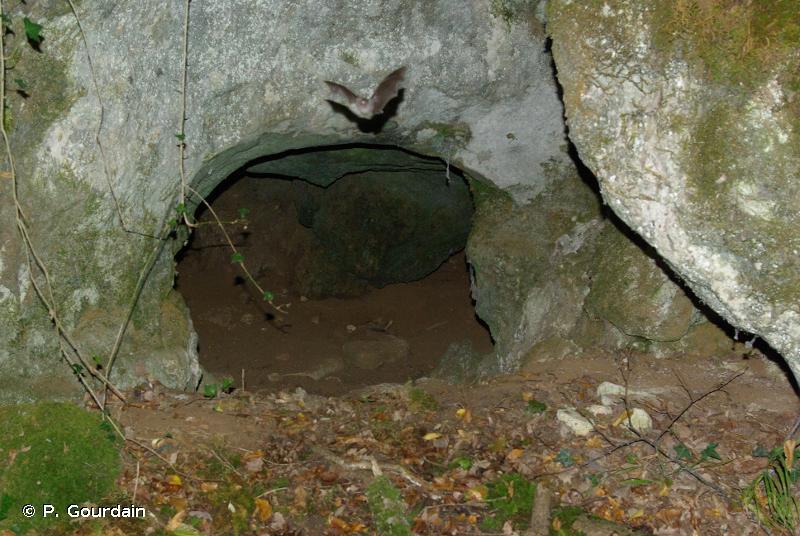 H1.1 - Entrées des grottes - EUNIS