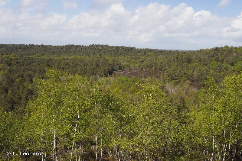Massif de Fontainebleau