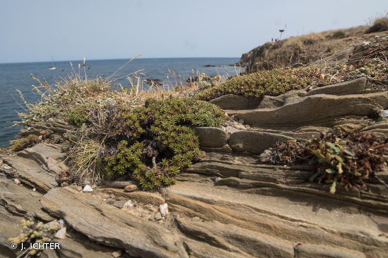 Côte rocheuse des Albères