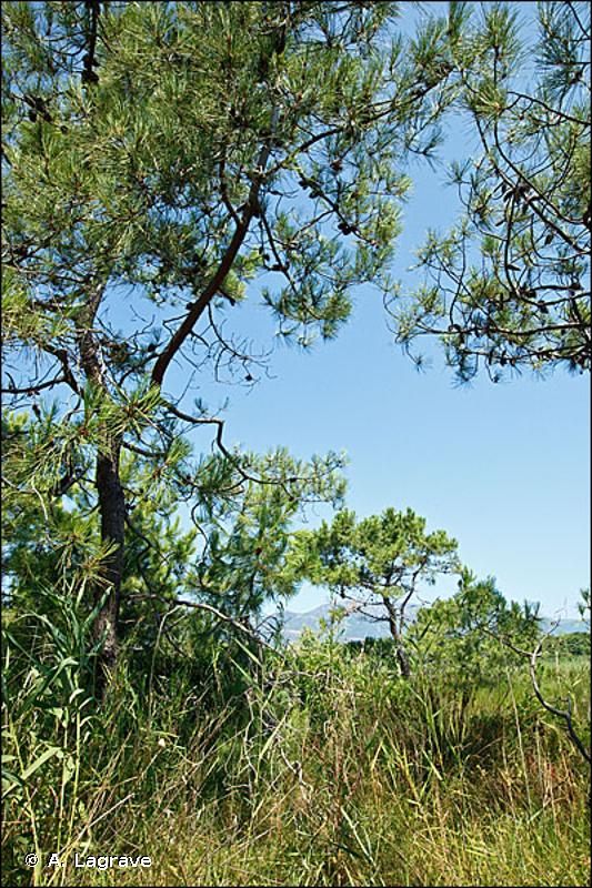 16.29 - Dunes boisées - CORINE biotopes
