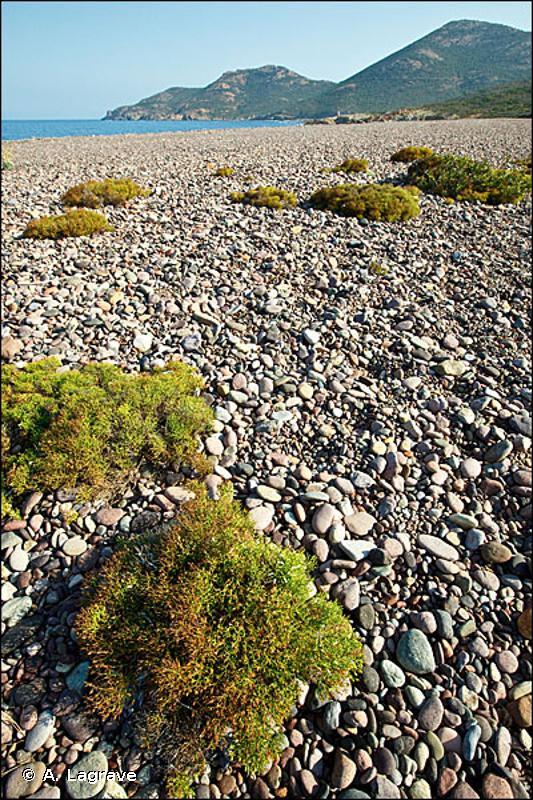 B2.3 - Partie supérieure des plages de galets avec végétation ouverte - EUNIS
