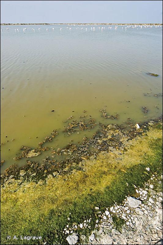 21 - Lagunes - CORINE biotopes