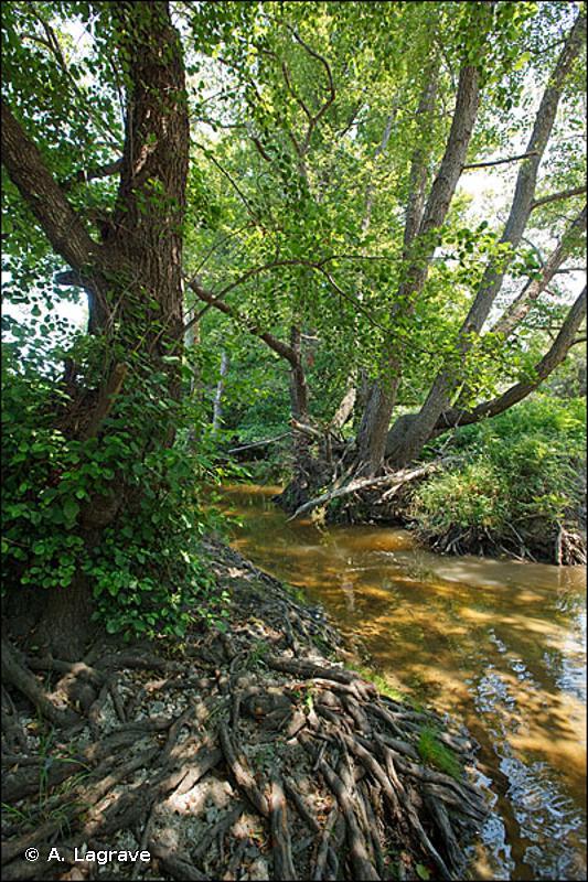 44.4 - Forêts mixtes de Chênes, d'Ormes et de Frênes des grands fleuves - CORINE biotopes