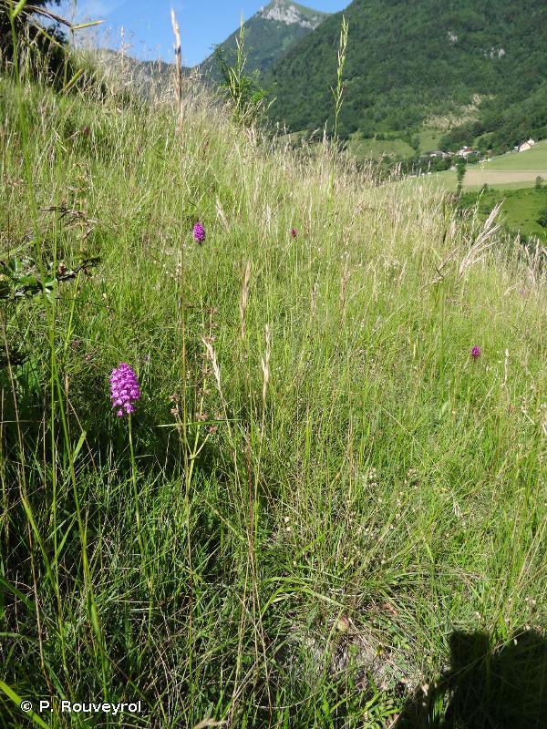 6210 - Pelouses sèches semi-naturelles et faciès d'embuissonnement sur calcaires (<em>Festuco-Brometalia</em>) (* sites d'orchidées remarquables) - Habitats d'intérêt communautaire