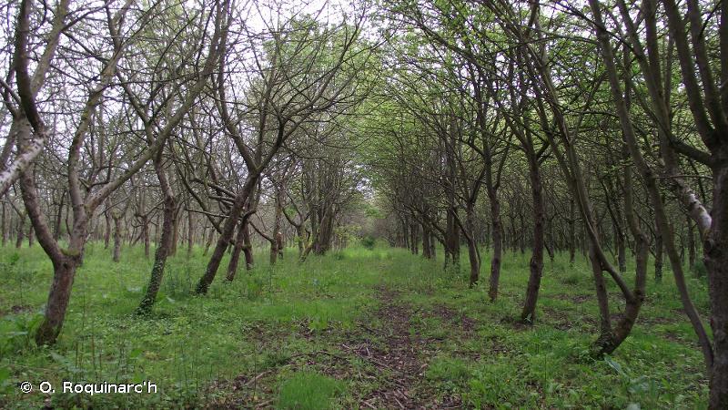 G1.D4 - Vergers d'arbres fruitiers - EUNIS