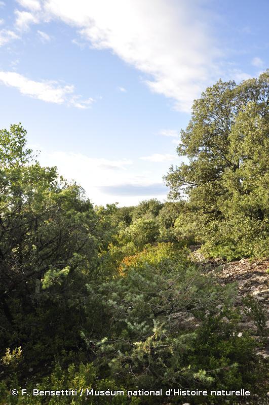 9340 - Forêts à <em>Quercus ilex</em> et <em>Quercus rotundifolia</em> - Habitats d'intérêt communautaire