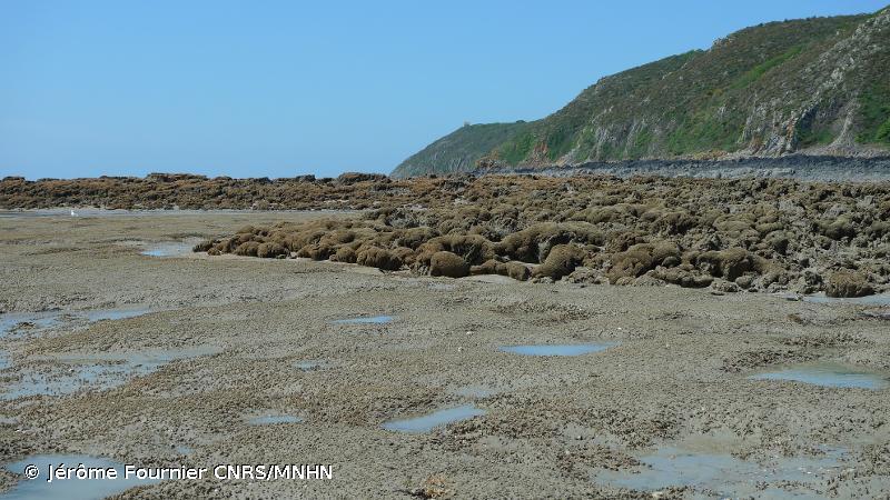 A2.245 - <em>Lanice conchilega</em> dans du sable intertidal - EUNIS