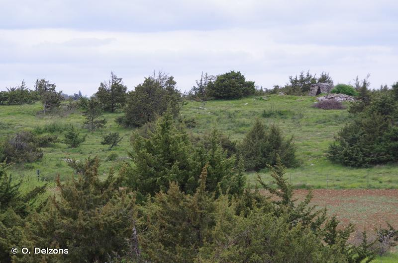 Pech Hiver, Bois de La Cayrousse et Pech de Triou