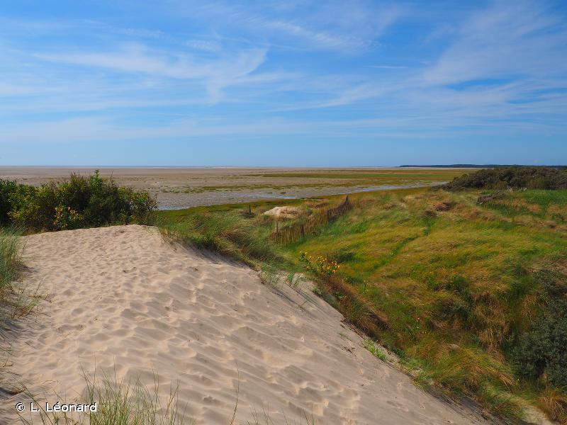 Estuaires et littoral picards (baies de Somme et d'Authie)