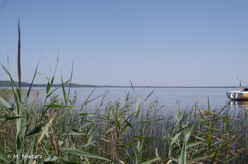 Zones humides de l'arrière dune du littoral girondin