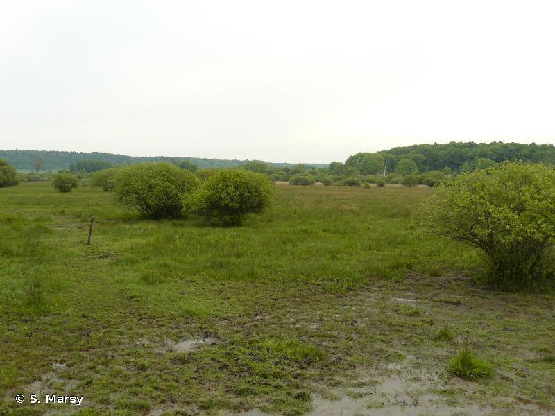 Marais de Pagny-sur-Meuse