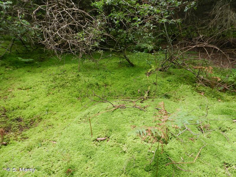Tourbière du Haut-Livradois : complexe tourbeux de Virennes
