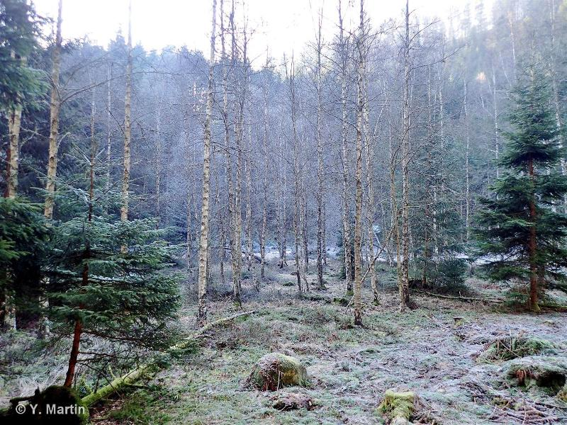 44.A1 - Bois de Bouleaux à Sphaignes - CORINE biotopes