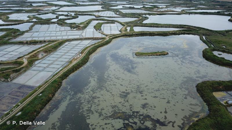 Marais salants de Guérande, traicts du Croisic, dunes de Pen Bron