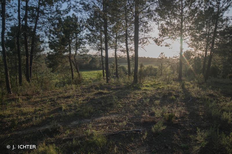 Marais del Sale, zones humides périphériques et forêt littorale de Pinia