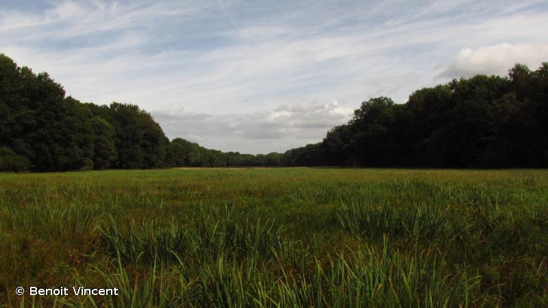 Massif forestier d'Epernay et étangs associés