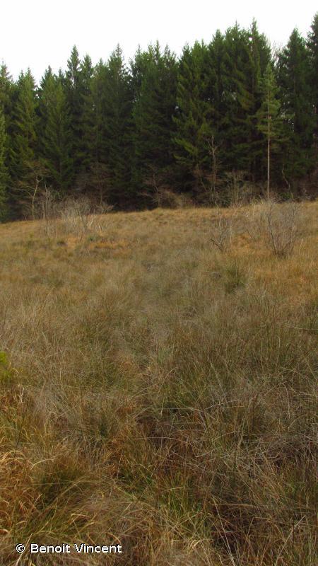Marais tufeux du plateau de Langres (secteur Sud-Est)