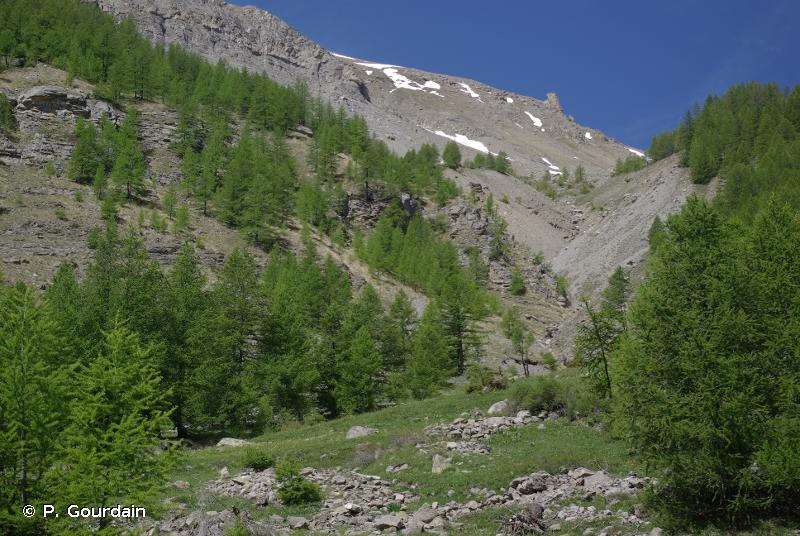G3.24 - Formations alpines secondaires à <em>Larix</em> - EUNIS